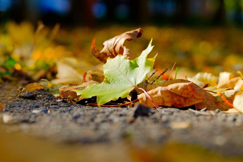 Ένα φύλλο σφενδάμου στο έδαφος στοκ φωτογραφίες με δικαίωμα ελεύθερης χρήσης