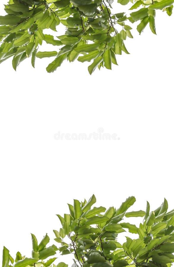 Ένα φύλλο στοκ εικόνα