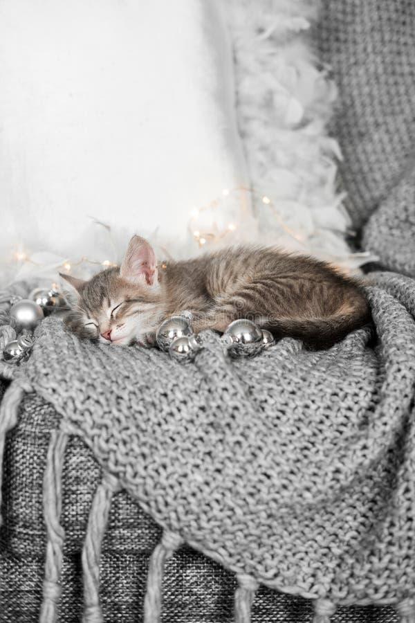 Ένα χαριτωμένο γατάκι στηρίζεται σε ένα γκρίζο καρό στη διακόσμηση Χριστουγέννων στοκ φωτογραφίες