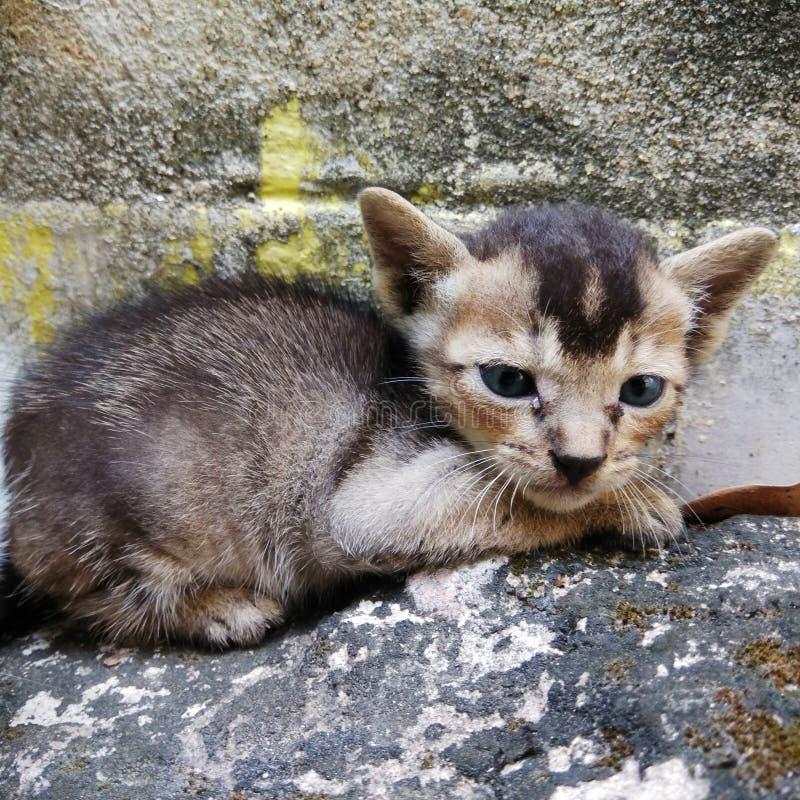 Ένα χαριτωμένο γατάκι της Βεγγάλης κάθεται στοκ εικόνες