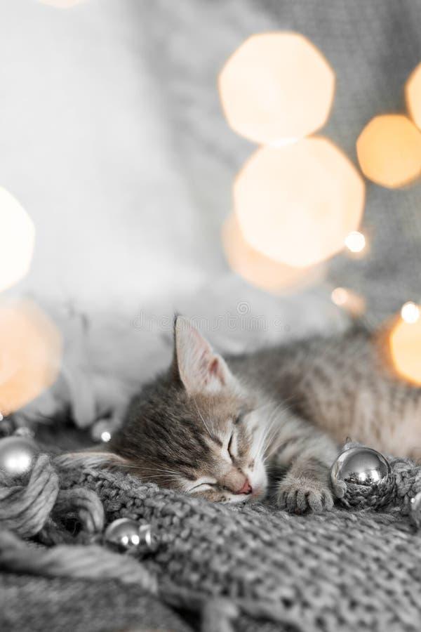 Ένα χαριτωμένο γκρίζο γατάκι βρίσκεται σε ένα γκρίζο καρό σε μια διακόσμηση Χριστουγέννων σε ένα κλίμα των φω'των στοκ φωτογραφία με δικαίωμα ελεύθερης χρήσης