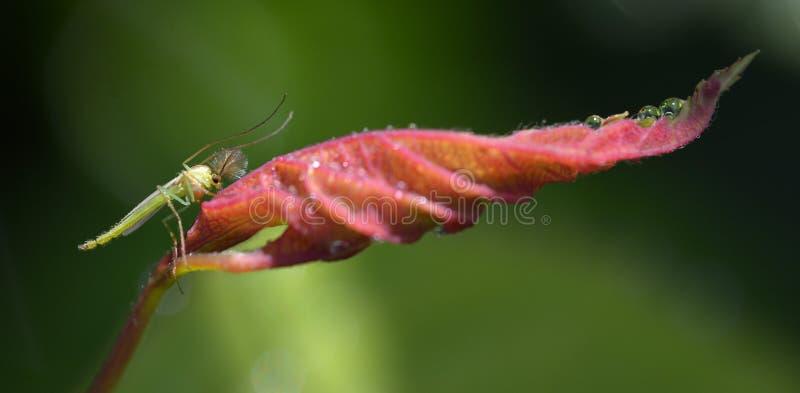 Ένα χαριτωμένο κουνούπι στοκ εικόνα