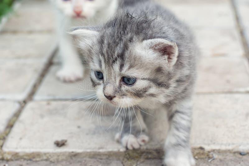 Download Ένα χαριτωμένο μικρό γατάκι Στοκ Εικόνα - εικόνα από νέος, γούνα: 62721027