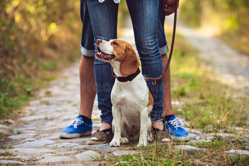 Ένα χαριτωμένο σκυλί λαγωνικών κάθεται στη φύση στοκ εικόνα