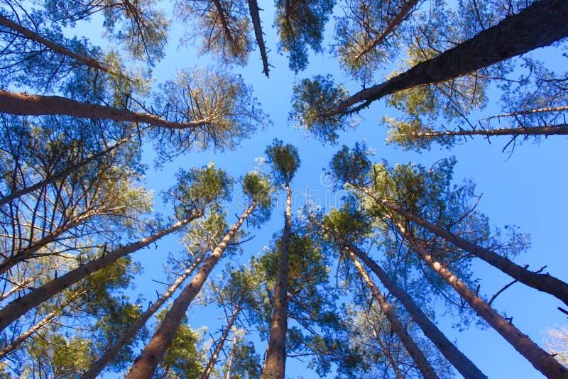Ένα χειμερινό δάσος στοκ εικόνες