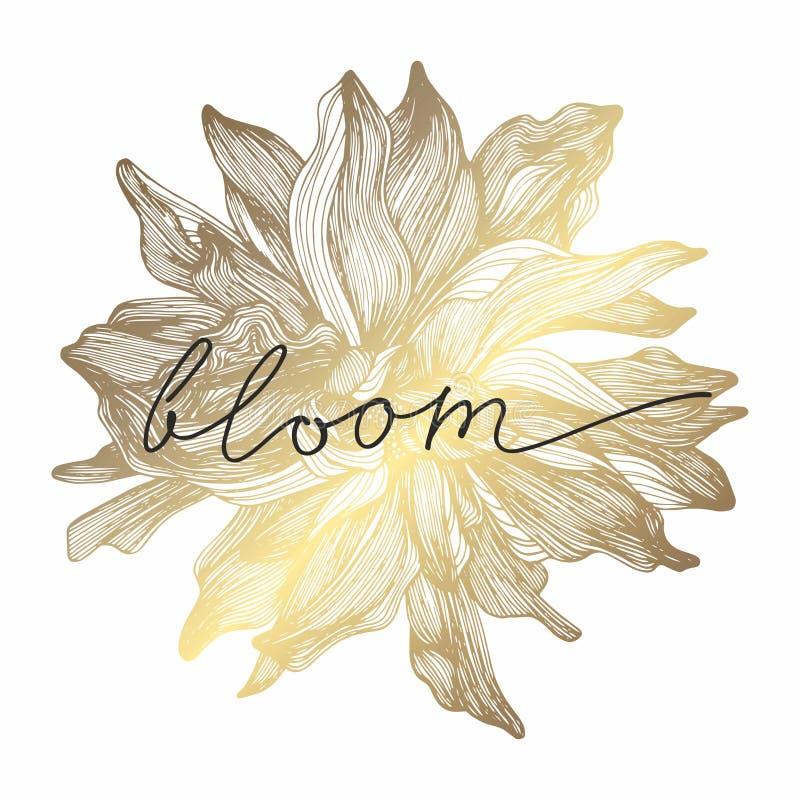 Ένα χρυσό λουλούδι επίσης corel σύρετε το διάνυσμα απεικόνισης χέρι σχεδίων νεολαίες γυναικών εσώρουχων πρωινού της οι επάνω θερμ διανυσματική απεικόνιση