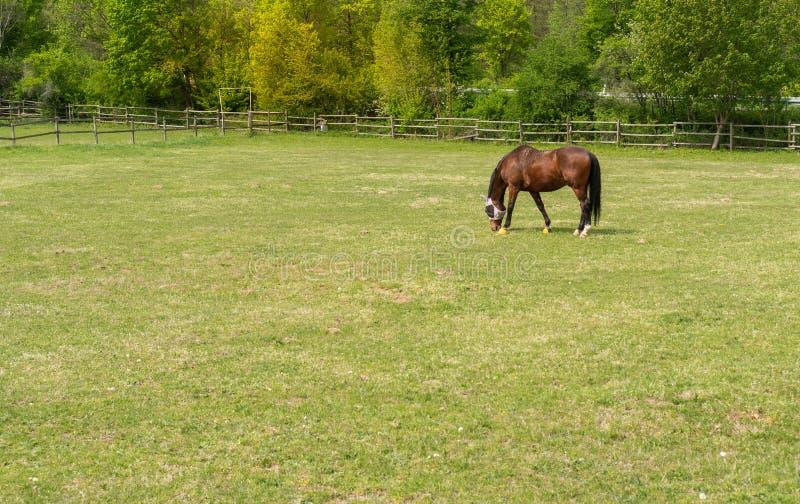 Ένα όμορφο άλογο στο λιβάδι Στενός διάδρομος για τα άλογα στοκ εικόνες με δικαίωμα ελεύθερης χρήσης