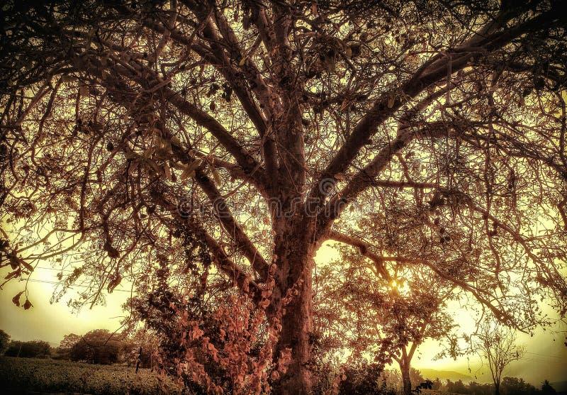 Ένα όμορφο δέντρο διακλαδίζεται με τις ακτίνες ήλιων βραδιού πλημμυρίζοντας σε τους στοκ εικόνες