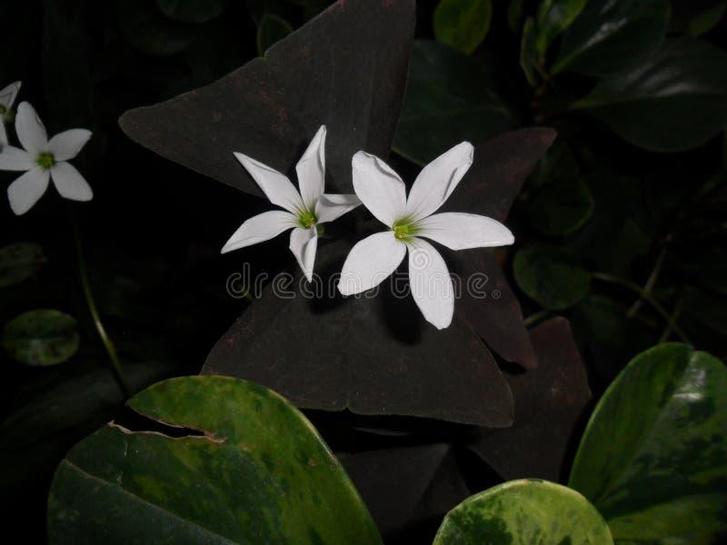 Ένα όμορφο λουλούδι στον κήπο στοκ φωτογραφία