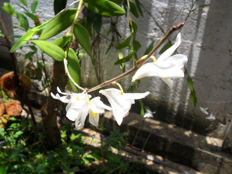 Ένα όμορφο λουλούδι στον κήπο στοκ εικόνες