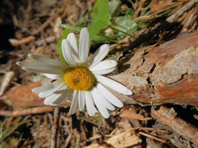 ένα όμορφο λουλούδι στον ξηρό στοκ φωτογραφία με δικαίωμα ελεύθερης χρήσης