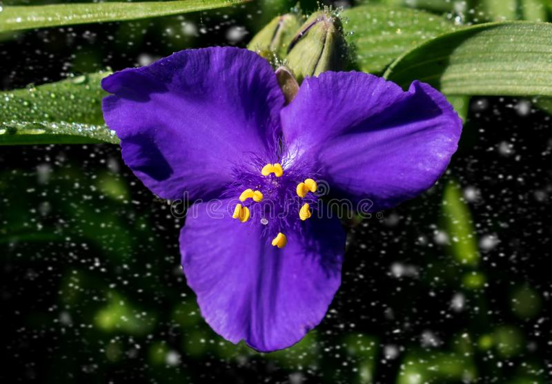 Ένα όμορφο μπλε λουλούδι, μόρια που κινείται στο υπόβαθρο στοκ εικόνες με δικαίωμα ελεύθερης χρήσης
