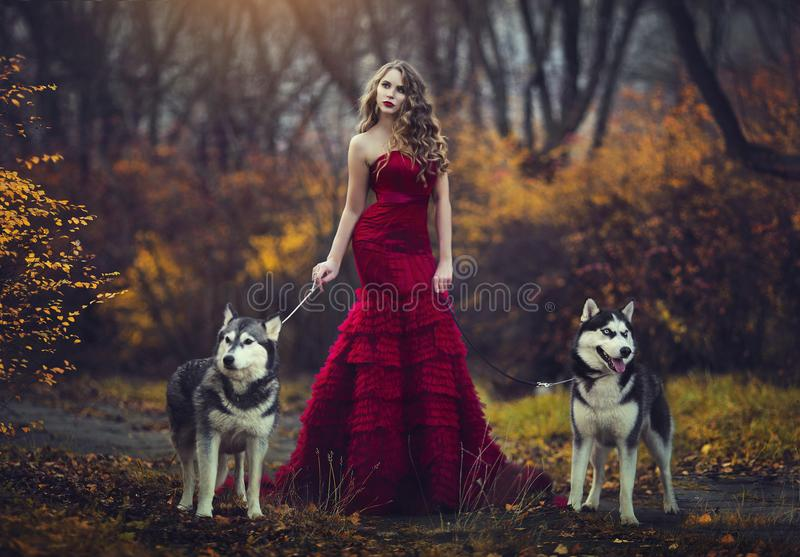 Ένα όμορφο ξανθό κορίτσι σε ένα κομψό κόκκινο φόρεμα, που περπατά με δύο γεροδεμένα σκυλιά σε ένα δάσος φθινοπώρου στοκ εικόνες με δικαίωμα ελεύθερης χρήσης