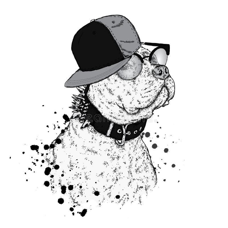 Ένα όμορφο πίτμπουλ σε μια ΚΑΠ επίσης corel σύρετε το διάνυσμα απεικόνισης Ένα thoroughbred σκυλί στα ενδύματα απεικόνιση αποθεμάτων
