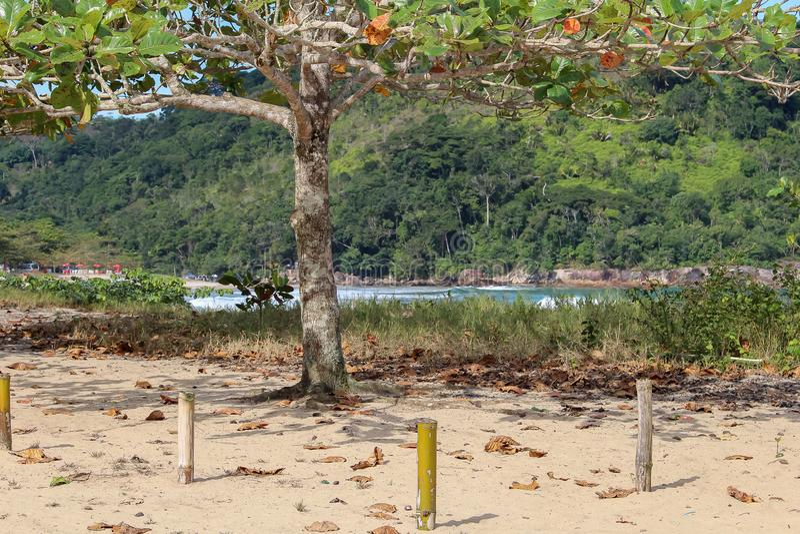 Ένα όμορφο τοπίο με έναν ποταμό Η βλάστηση είναι πολύβλαστη στοκ φωτογραφία με δικαίωμα ελεύθερης χρήσης