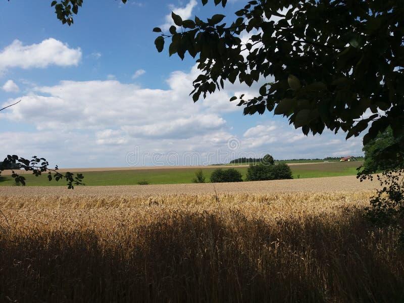 Ένα όμορφο meadown στοκ εικόνες με δικαίωμα ελεύθερης χρήσης