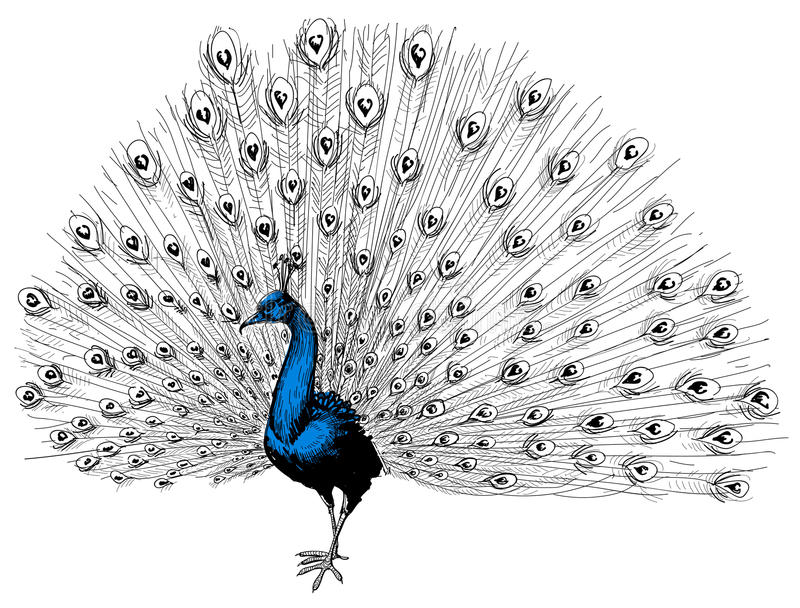 Ένα όμορφο peacock ελεύθερη απεικόνιση δικαιώματος