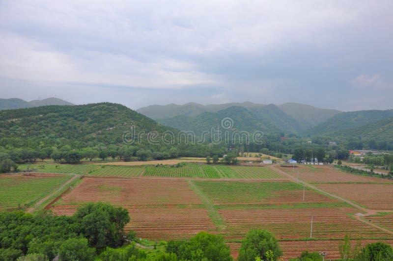 Ένα cropland στοκ εικόνες με δικαίωμα ελεύθερης χρήσης