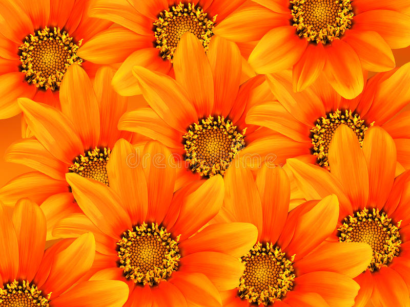 Floral υπόβαθρο σχεδίου ζωγραφικής gerbera στοκ εικόνες με δικαίωμα ελεύθερης χρήσης