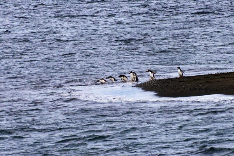 Ένα penguin με μια σειρά αναμονής της κατάδυσης στοκ εικόνες