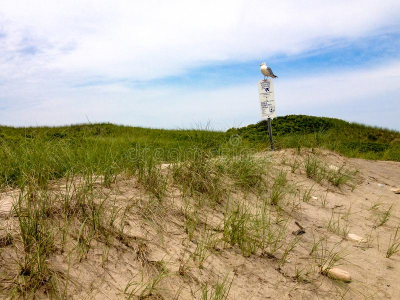Ένα seagull που σκαρφαλώνει σε ένα σημάδι στοκ εικόνες