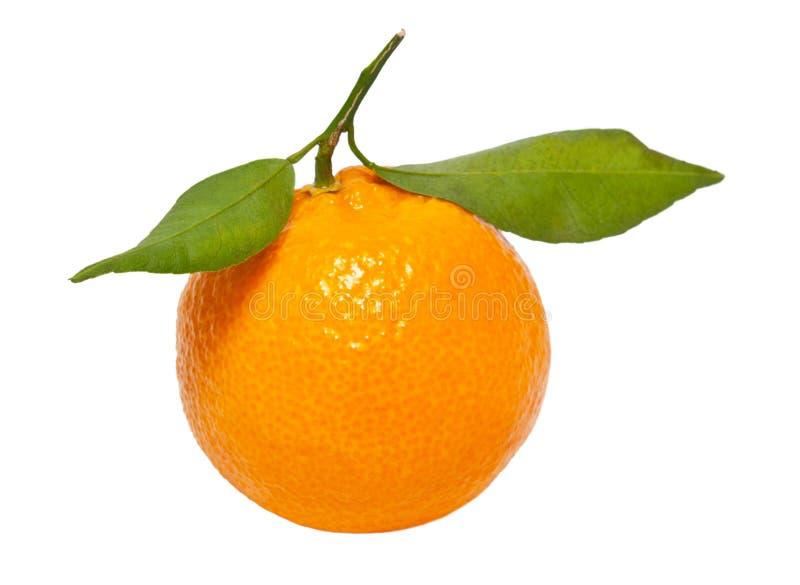 Ένα tangerine στοκ φωτογραφίες