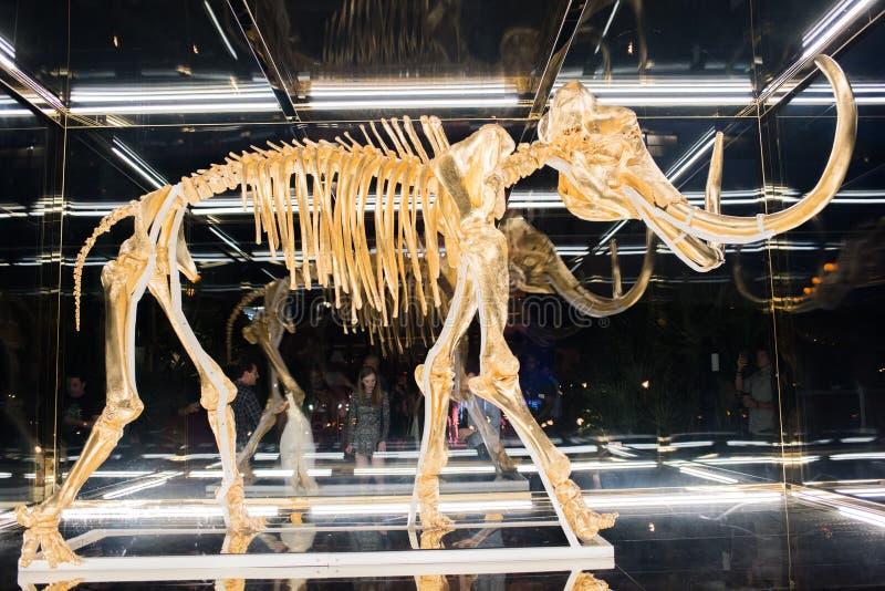 Ένα wooly μαμούθ που σφραγίζεται σε μια περίπτωση γυαλιού στοκ φωτογραφία με δικαίωμα ελεύθερης χρήσης