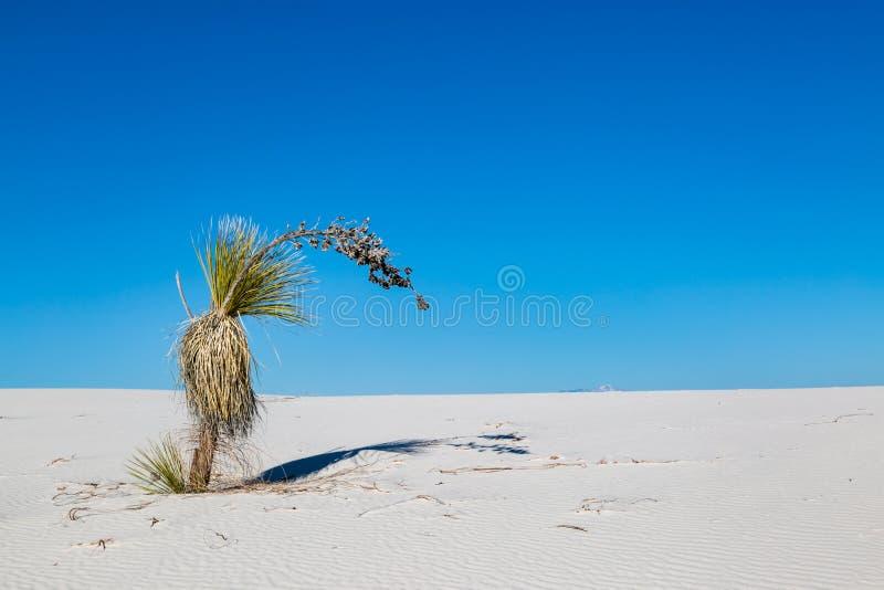 Ένα Yucca στην έρημο στοκ εικόνες