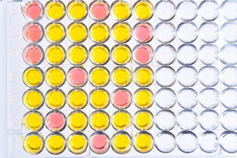 Ένζυμο-συνδεμένη immunosorbent δοκιμή ή πιάτο της ELISA στοκ εικόνες