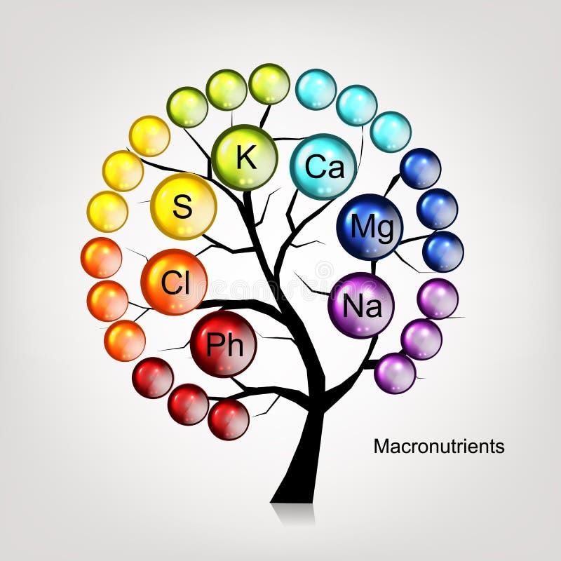 Έννοια δέντρων βιταμινών για το σχέδιό σας διανυσματική απεικόνιση