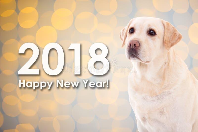 έννοια έτους του 2018 νέα - χρυσό retriever σκυλιών πέρα από την πλάτη Χριστουγέννων στοκ εικόνα