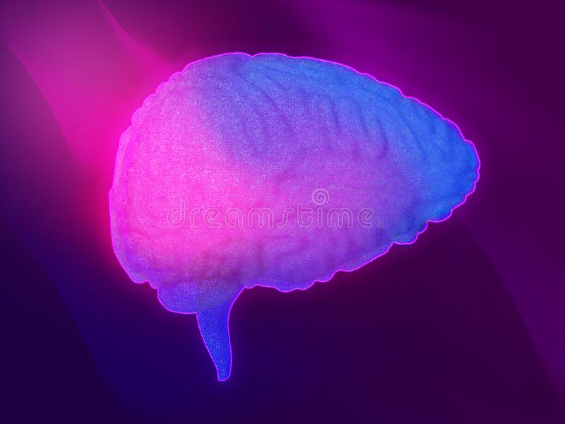 Έννοια εγκεφάλου νέου παρεγκεφαλίδα Ανθρώπινη τρισδιάστατη απεικόνιση εγκεφάλου απεικόνιση αποθεμάτων