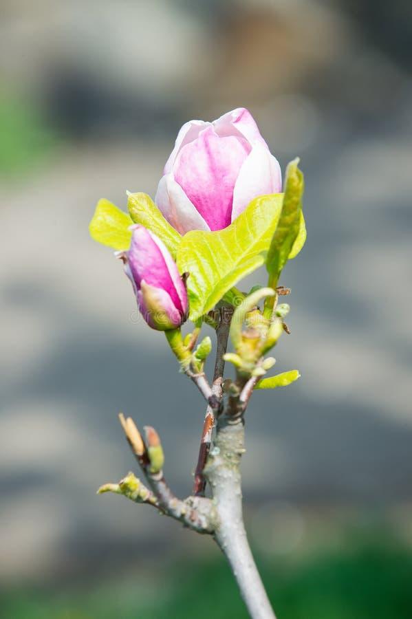 Έννοια εποχής άνοιξης Νέο ξύπνημα ζωής Περιβάλλον ομορφιάς φύσης στοκ φωτογραφία με δικαίωμα ελεύθερης χρήσης