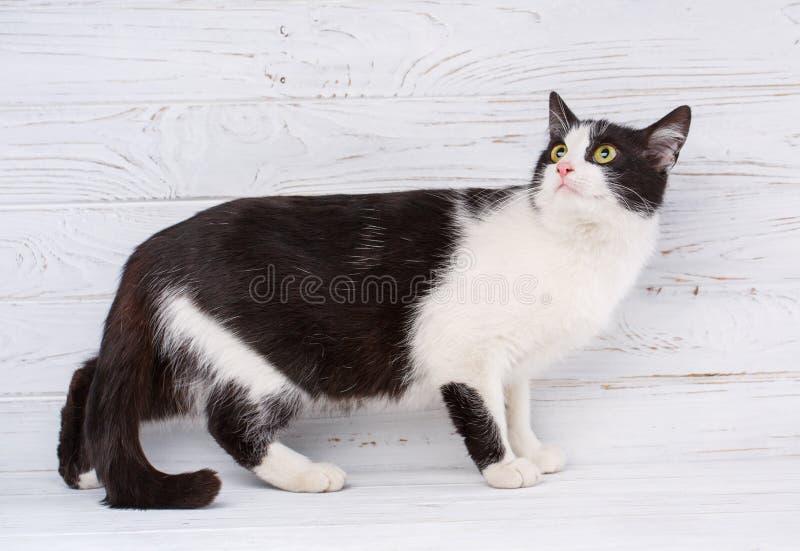 Έννοια ζώων, γατών και κατοικίδιων ζώων - πορτρέτο μιας γραπτής γάτας στοκ εικόνα με δικαίωμα ελεύθερης χρήσης