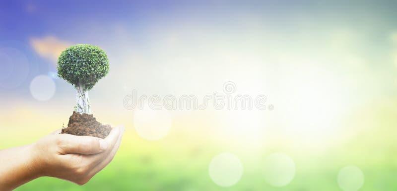 Έννοια ημέρας παγκόσμιου περιβάλλοντος: Ανθρώπινα χέρια που κρατούν το μεγάλο δέντρο πέρα από το πράσινο δασικό υπόβαθρο στοκ φωτογραφία με δικαίωμα ελεύθερης χρήσης