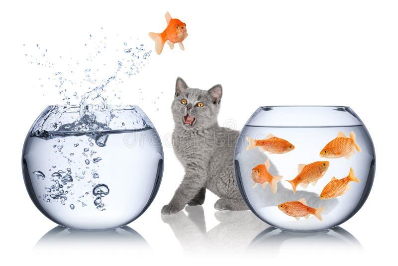 Έννοια διαφυγών ψαριών στοκ φωτογραφίες με δικαίωμα ελεύθερης χρήσης