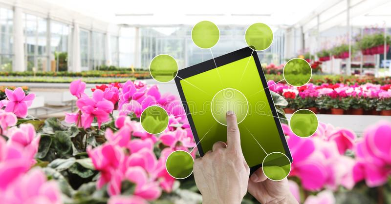 Έννοια κηπουρικής και ηλεκτρονικού εμπορίου λουλουδιών, on-line που ψωνίζει στην ψηφιακή ταμπλέτα, την υπόδειξη χεριών και την οθ στοκ φωτογραφίες