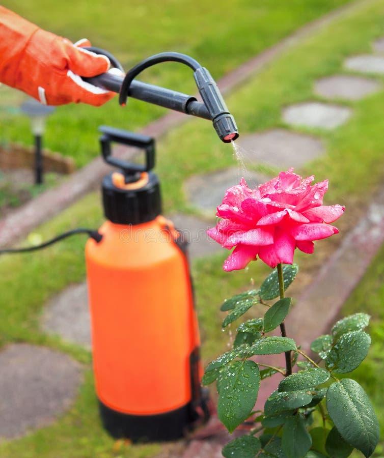 Έννοια κηπουρικής στοκ φωτογραφία με δικαίωμα ελεύθερης χρήσης