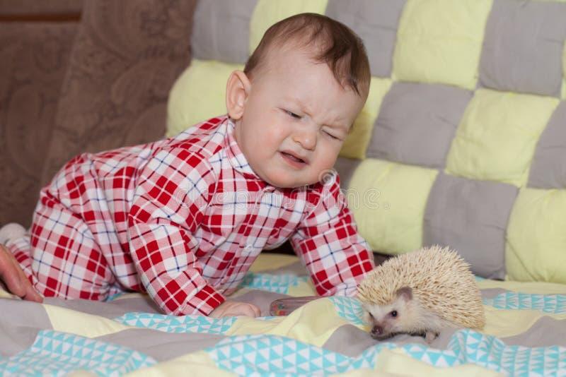 Έννοια πόνου τσιμπήστε τον κίνδυνο σκαντζόχοιρος και παιδί χαριτωμένα κατοικίδια ζώα στοκ φωτογραφίες