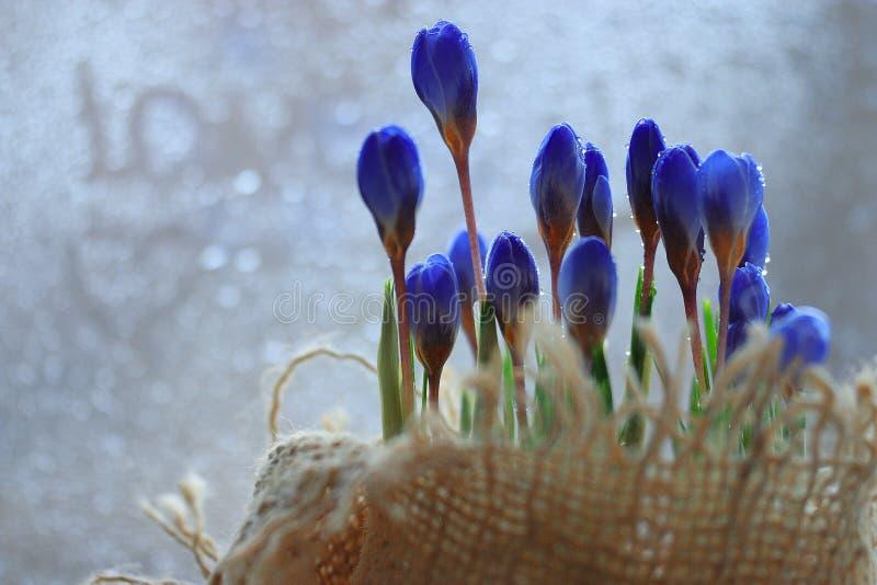 Έννοια της αγάπης με τα άγρια λουλούδια άνοιξη στοκ εικόνα