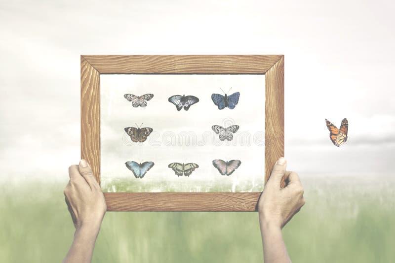 Έννοια της ελευθερίας μιας πεταλούδας που δραπετεύει από τη ζωγραφική του συλλέκτη του στοκ φωτογραφίες με δικαίωμα ελεύθερης χρήσης