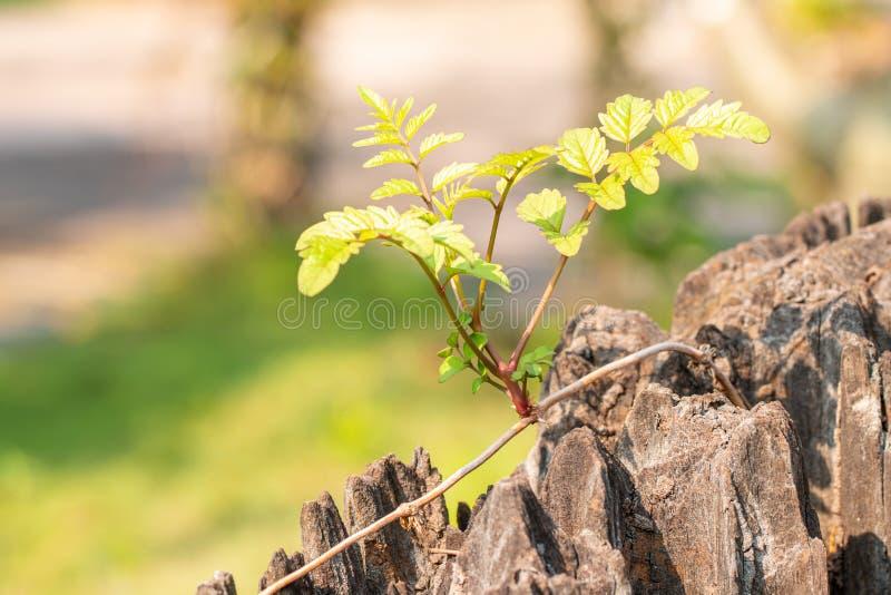 Έννοια της επιβίωσης, μικρά φυτά στοκ εικόνα