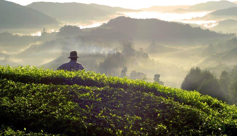 Έννοια της Μαλαισίας φυτειών φύλλων τσαγιού της Farmer στοκ εικόνες