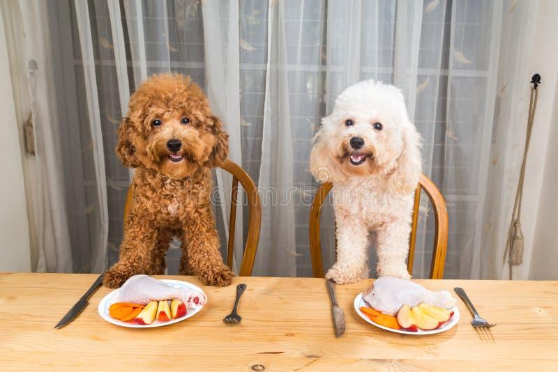Έννοια των συγκινημένων σκυλιών που έχουν το εύγευστο ακατέργαστο κρεατάλευρο στον πίνακα στοκ εικόνες
