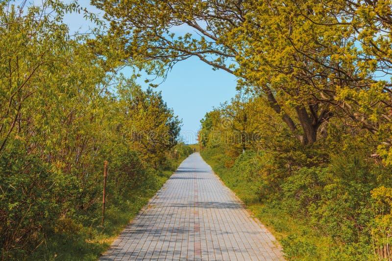Έννοια φύσης, πεζοδρόμιο στο πράσινο πάρκο στοκ εικόνα