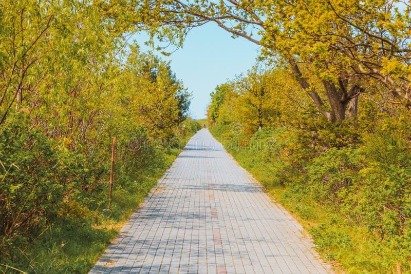Έννοια φύσης, πεζοδρόμιο στο πράσινο πάρκο στοκ εικόνα με δικαίωμα ελεύθερης χρήσης