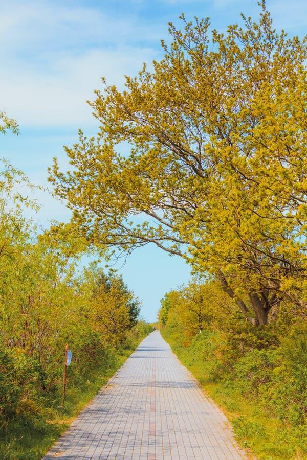 Έννοια φύσης, πεζοδρόμιο στο πράσινο πάρκο στοκ φωτογραφία με δικαίωμα ελεύθερης χρήσης