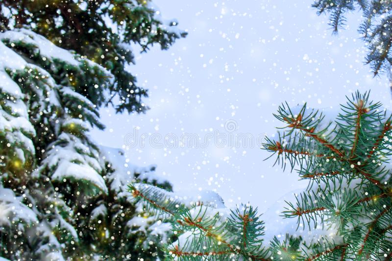 Έννοια χειμερινής ομορφιάς στο χιονώδες δάσος έλατου στοκ φωτογραφία με δικαίωμα ελεύθερης χρήσης