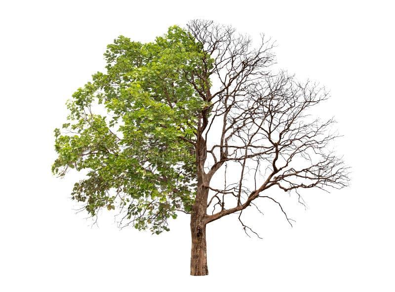 Έννοια doubleness Νεκρό δέντρο στοκ φωτογραφία με δικαίωμα ελεύθερης χρήσης