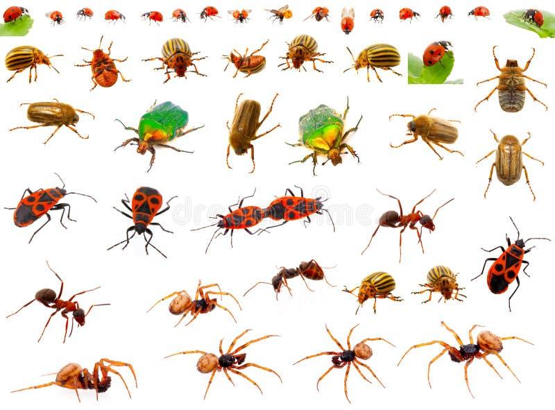 έντομα που τίθενται στοκ φωτογραφία με δικαίωμα ελεύθερης χρήσης